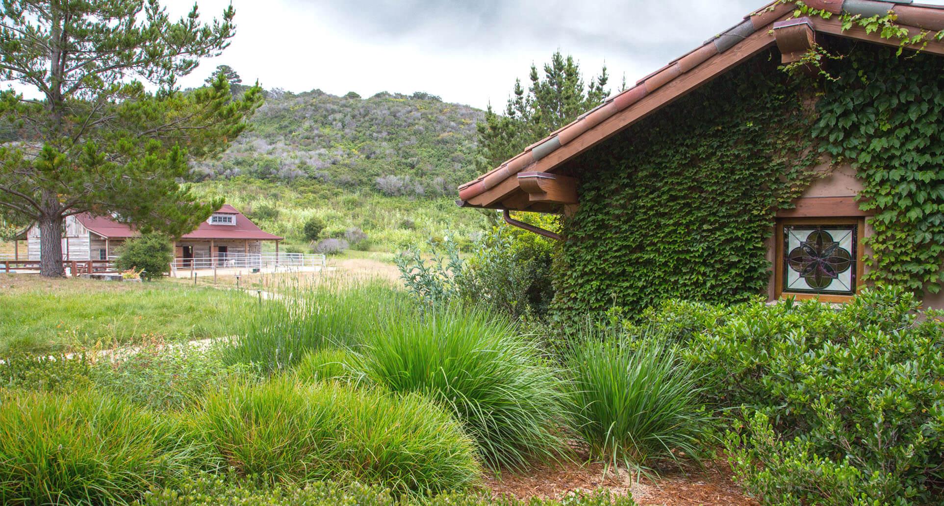 Rustic-Garden-1-Grasses-Boston-Ivy